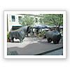 牛と熊/フランクフルト